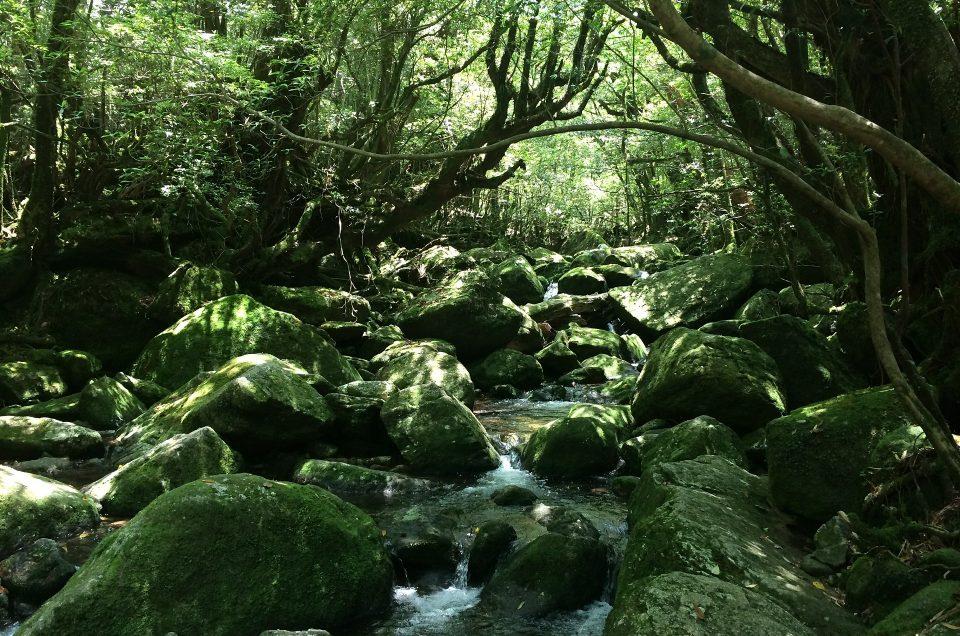 Yakushima (เกาะยาคุ) จังหวัด คาโกชิม่า ประเทศญี่ปุ่น